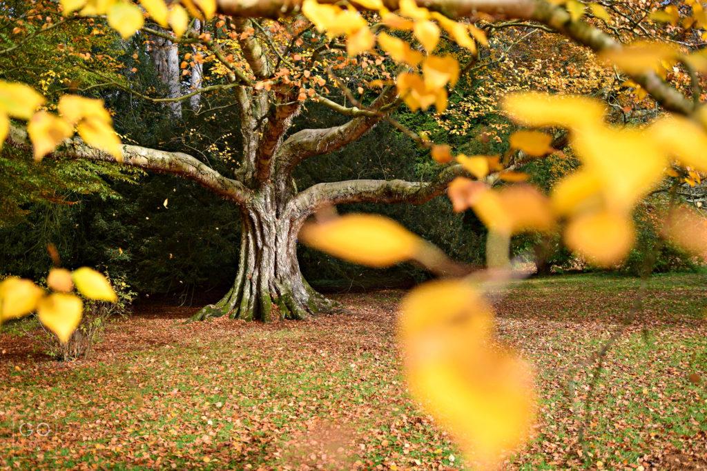 Autunm at Westonbirt National Arboretum