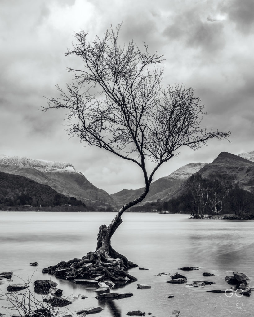 A tiny little tree on the shore of lake Llyn Padarn in Snowdonia National Park