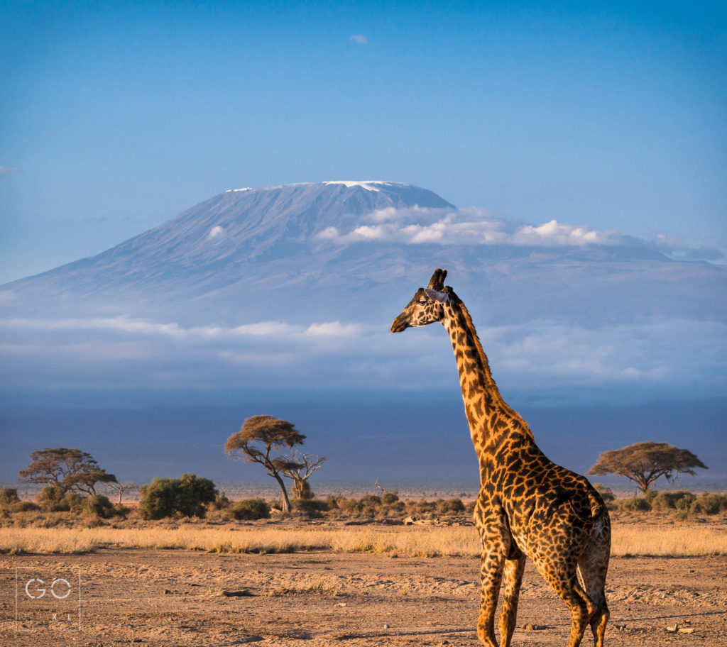Tallest in Africa
