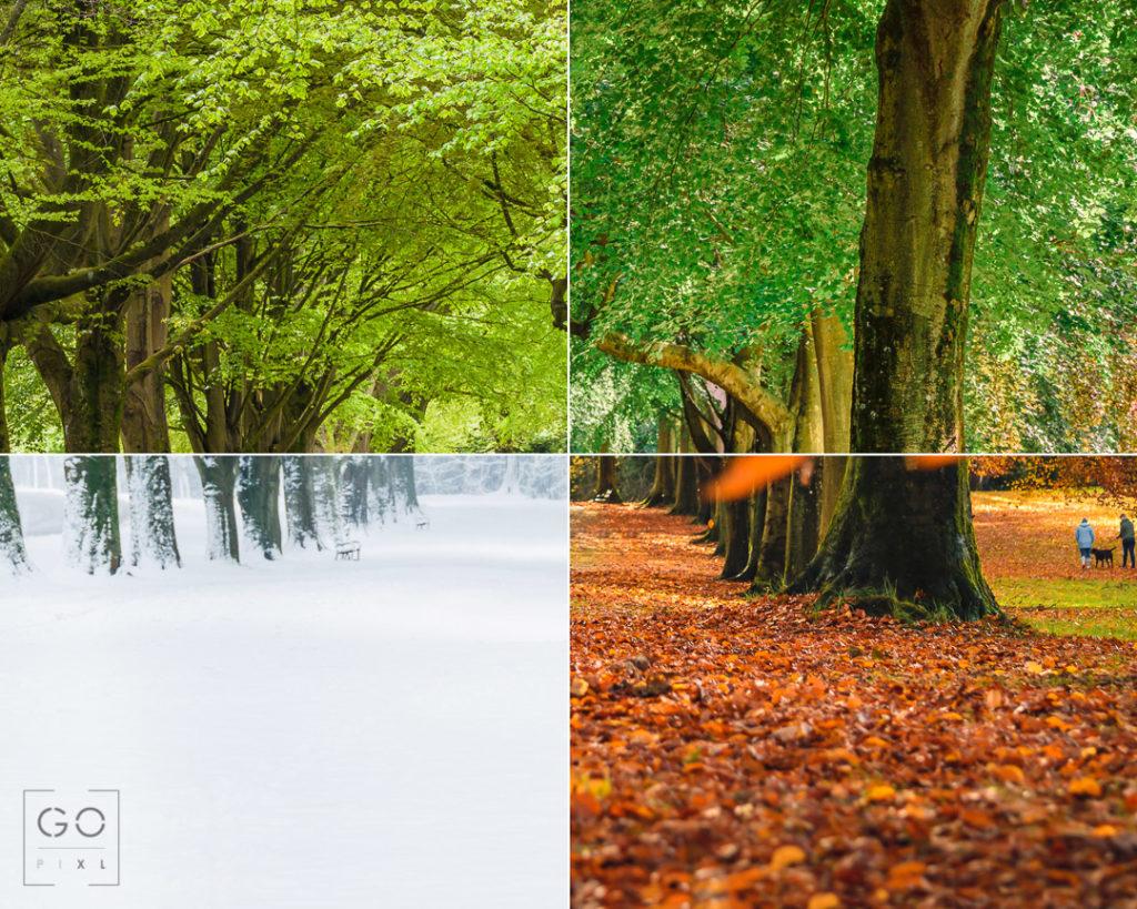 4 Seasons in Clifton